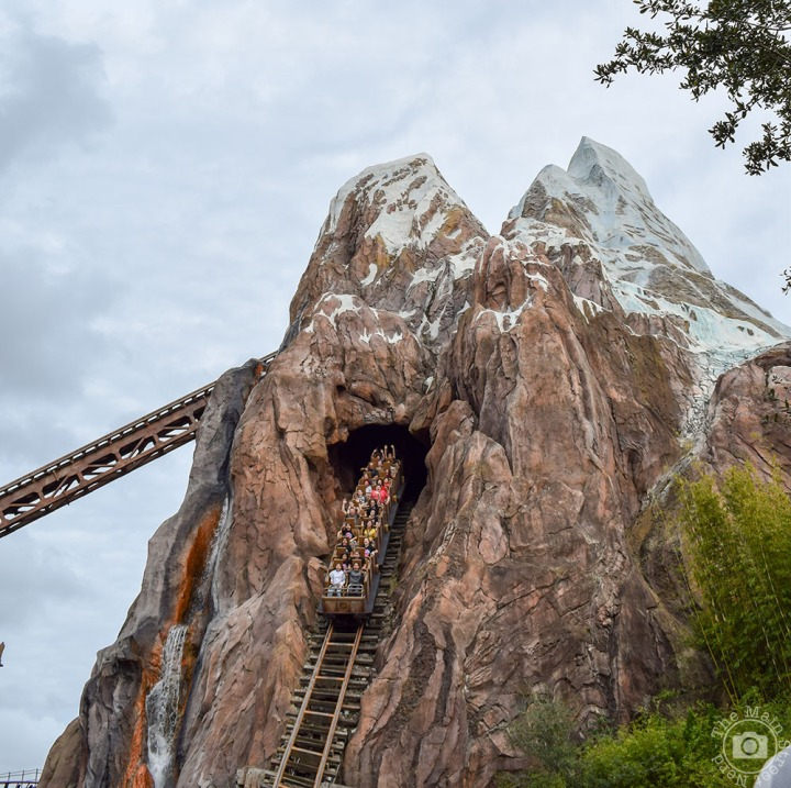 [Walt Disney World] Top 5 Attractions à AnimalKingdom